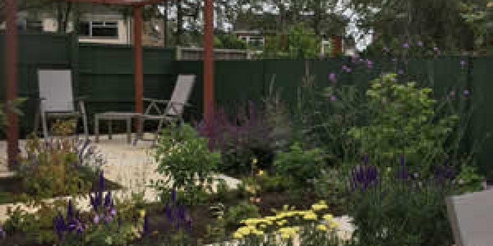 Contemporary Back Garden
